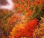 Fall Colors near Blowing Rock/Boone, North Carolina.